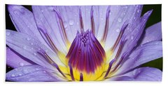 Royal Purple Water Lily #3 Beach Sheet
