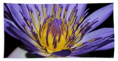 Royal Purple Water Lily #5 Beach Towel by Judy Whitton