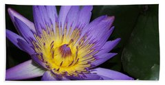 Royal Purple Water Lily #6 Beach Towel