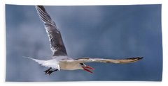 Beach Sheet featuring the photograph Royal Tern 1 by Ludwig Keck