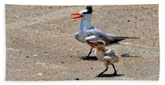 Royal Tern With Chick Beach Sheet by Ludwig Keck