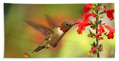 Ruby Throat Hummingbird Photo Beach Towel by Luana K Perez
