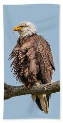 Ruffled Feathers Bald Eagle Beach Towel