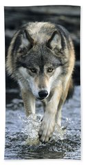 Beach Towel featuring the photograph Running Wolf by Chris Scroggins
