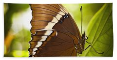 Beach Sheet featuring the photograph Rusty Tip Butterfly by Bradley R Youngberg