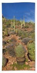 Saguaro And Barrel Cacti  Tonto N M Beach Towel