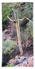 Saguaro Skeleton Beach Sheet