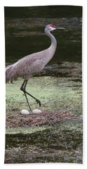 Beach Sheet featuring the photograph Sandhill Crane And Eggs by Paul Rebmann