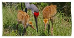 Sandhill Crane Family Feeding Beach Towel