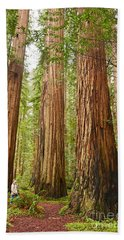 Scale - The Beautiful And Massive Giant Redwoods Sequoia Sempervirens In Redwood National Park. Beach Towel