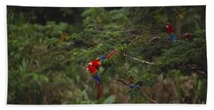 Scarlet Macaw And Green Winged Macaws Beach Towel