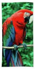Scarlet Macaw Ara Macao Beach Towel