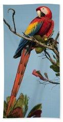 Scarlet Macaw Ara Macao, Tarcoles Beach Towel