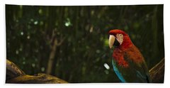 Scarlet Macaw Profile Beach Sheet by Bradley R Youngberg
