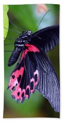 Scarlet Mormon Beach Sheet