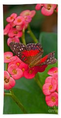 Scarlet Swallowtail Butterfly On Crown Of Thorns Flowers Beach Towel