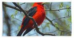 Scarlet Tanager In The Forest Beach Towel
