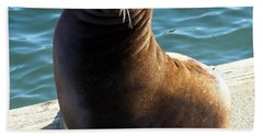 Beach Towel featuring the photograph Sea Lion Basking In The Sun by Chalet Roome-Rigdon