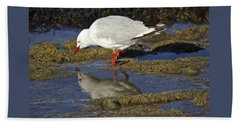 Seagull Reflections Beach Sheet by Venetia Featherstone-Witty