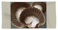 Seashells Spectacular No 22 Beach Sheet
