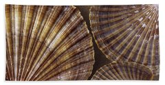 Beach Towel featuring the photograph Seashells Spectacular No 7 by Ben and Raisa Gertsberg