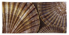 Seashells Spectacular No 7 Beach Towel