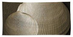 Seashells Spectacular No 8 Beach Towel