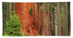 Sequoias Beach Towel