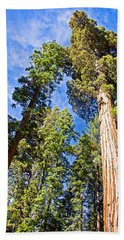 Sequoias Reaching To The Clouds In Mariposa Grove In Yosemite National Park-california Beach Sheet