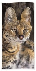 Beach Towel featuring the photograph Serval Portrait Wildlife Rescue by Dave Welling