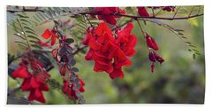 Sesbania Punicea Beach Towel by Kim Pate