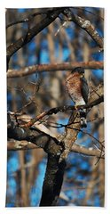 Beach Towel featuring the photograph Sharp Shinned Hawk by Mim White