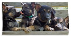 Shepherd Pups 5 Beach Towel