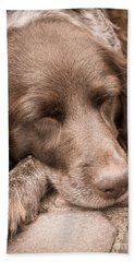 Shishka Dog Dreaming The Day Away Beach Towel