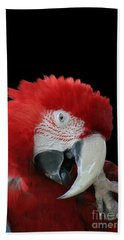 Shy Macaw Beach Towel by Judy Whitton