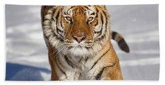 Siberian Tiger Coming Forward Beach Sheet