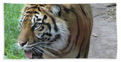 Beach Sheet featuring the photograph Siberian Tiger by Lingfai Leung