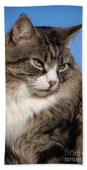 Silver Tabby Cat Beach Towel
