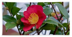 Single Petal Red Camellia Flowers Art Print Beach Towel