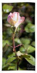 Beach Towel featuring the photograph Single Rose by David Millenheft