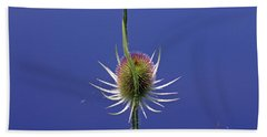 Single Teasel Beach Sheet