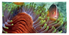 Skunk Anemonefish And Indian Bulb Beach Towel