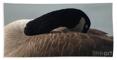 Sleeping Canada Goose Beach Sheet