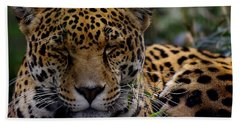 Sleeping Jaguar Beach Towel