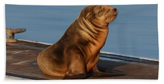 Sleeping Wild Sea Lion Pup  Beach Sheet