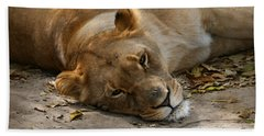 Beach Towel featuring the photograph Sleepy Lioness by Ann Lauwers