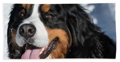 Smiling Bernese Mountain Dog In Winter Snow Beach Towel