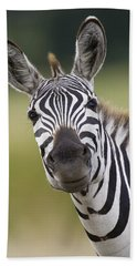 Beach Towel featuring the photograph Smiling Burchells Zebra by Suzi Eszterhas