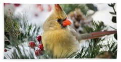 Beach Towel featuring the photograph Snow Cardinal by Christina Rollo