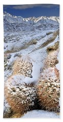Beach Towel featuring the photograph Snow Covered Cactus Below Mount Whitney Eastern Sierras by Dave Welling